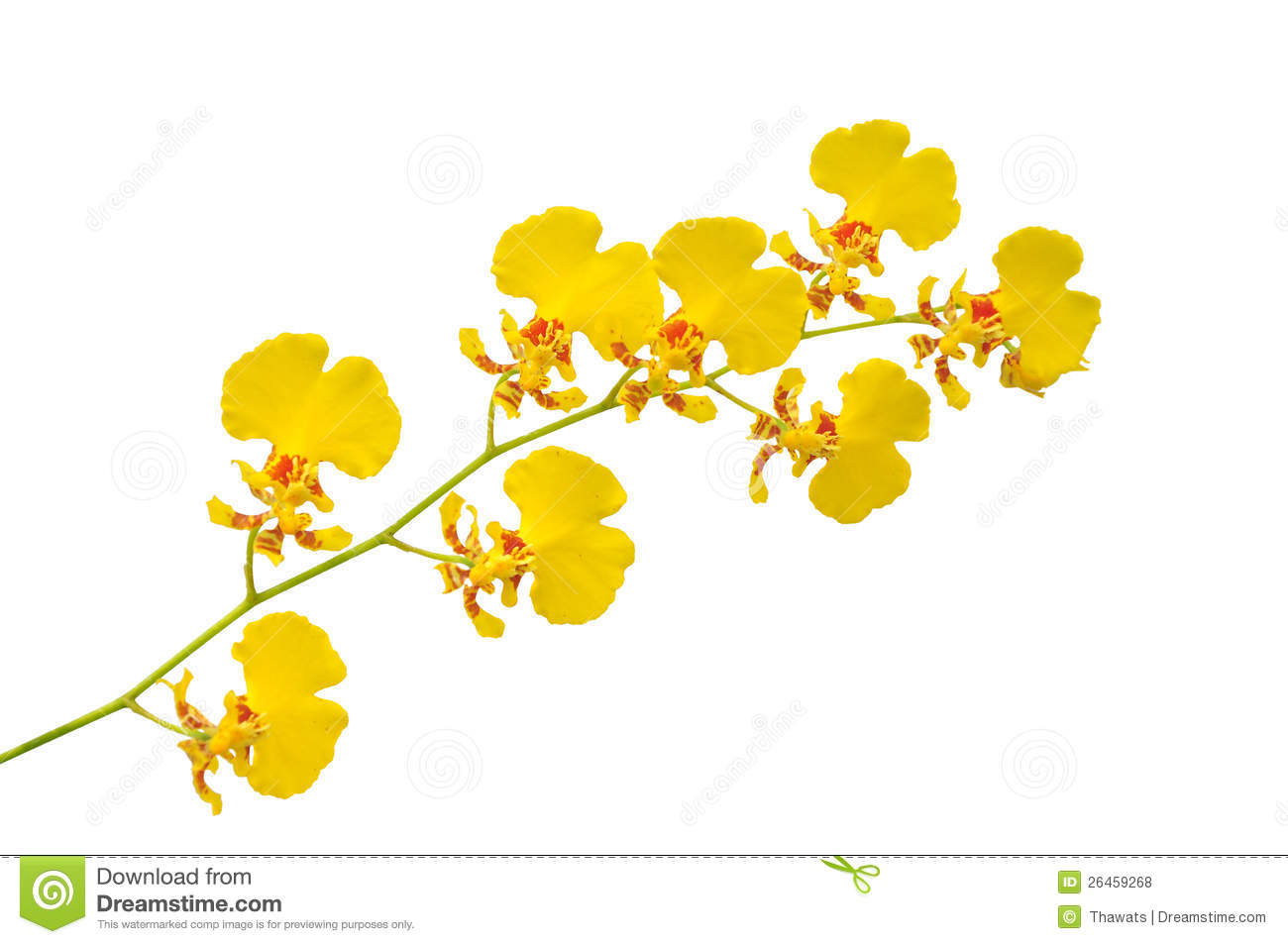 Small Yellow Orchid Royalty Free Stock Photos - Image: 26459268