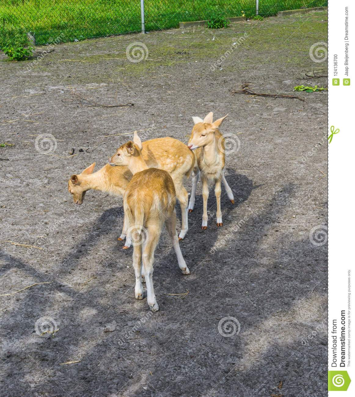 Small young deers group animals farm
