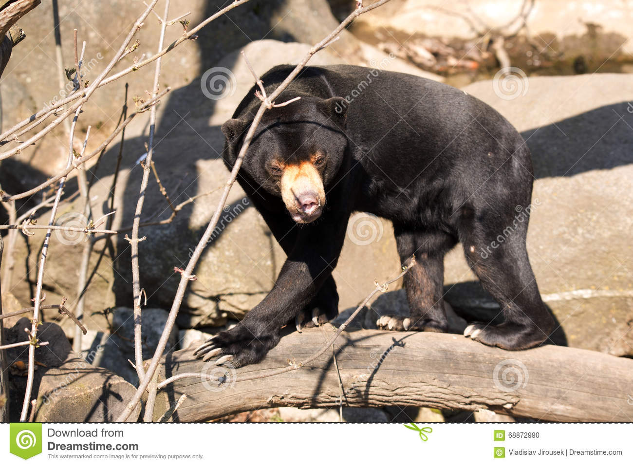 bear branch single parents A controversial proposal to allow bear hunting in connecticut  your parents are very  performed in the credit union's new milford branch.