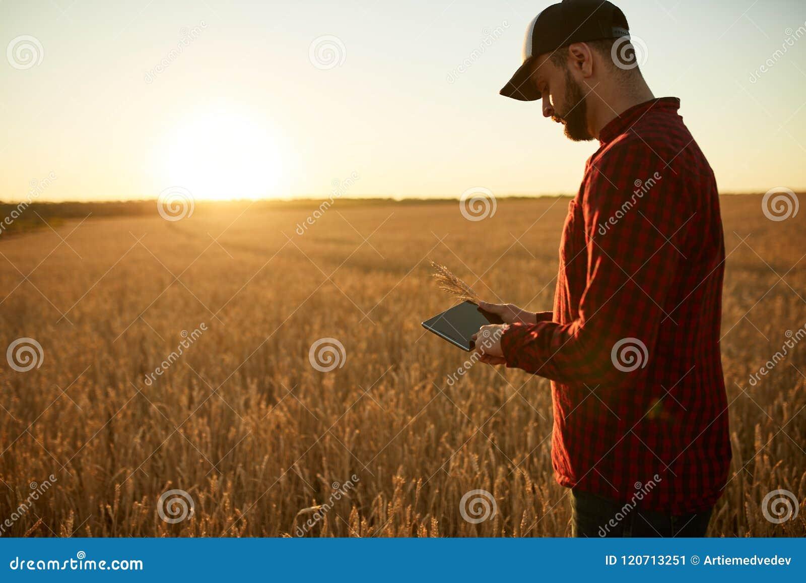 Smart die gebruikend moderne technologieën in landbouw bewerken De landbouwer van de mensenagronoom met digitale tabletcomputer i