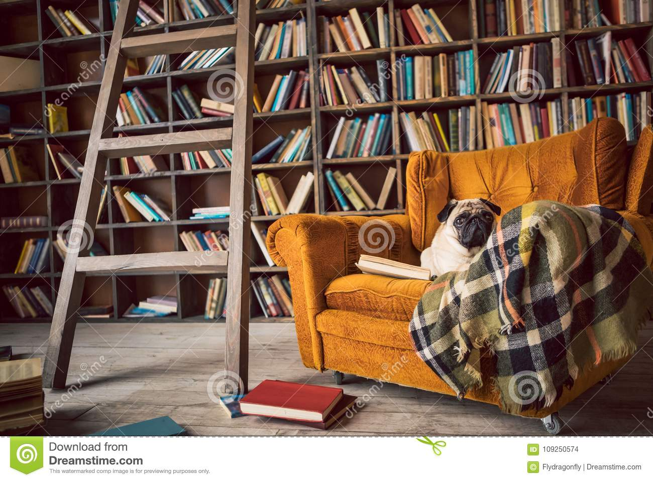 Smart dog in library chair.