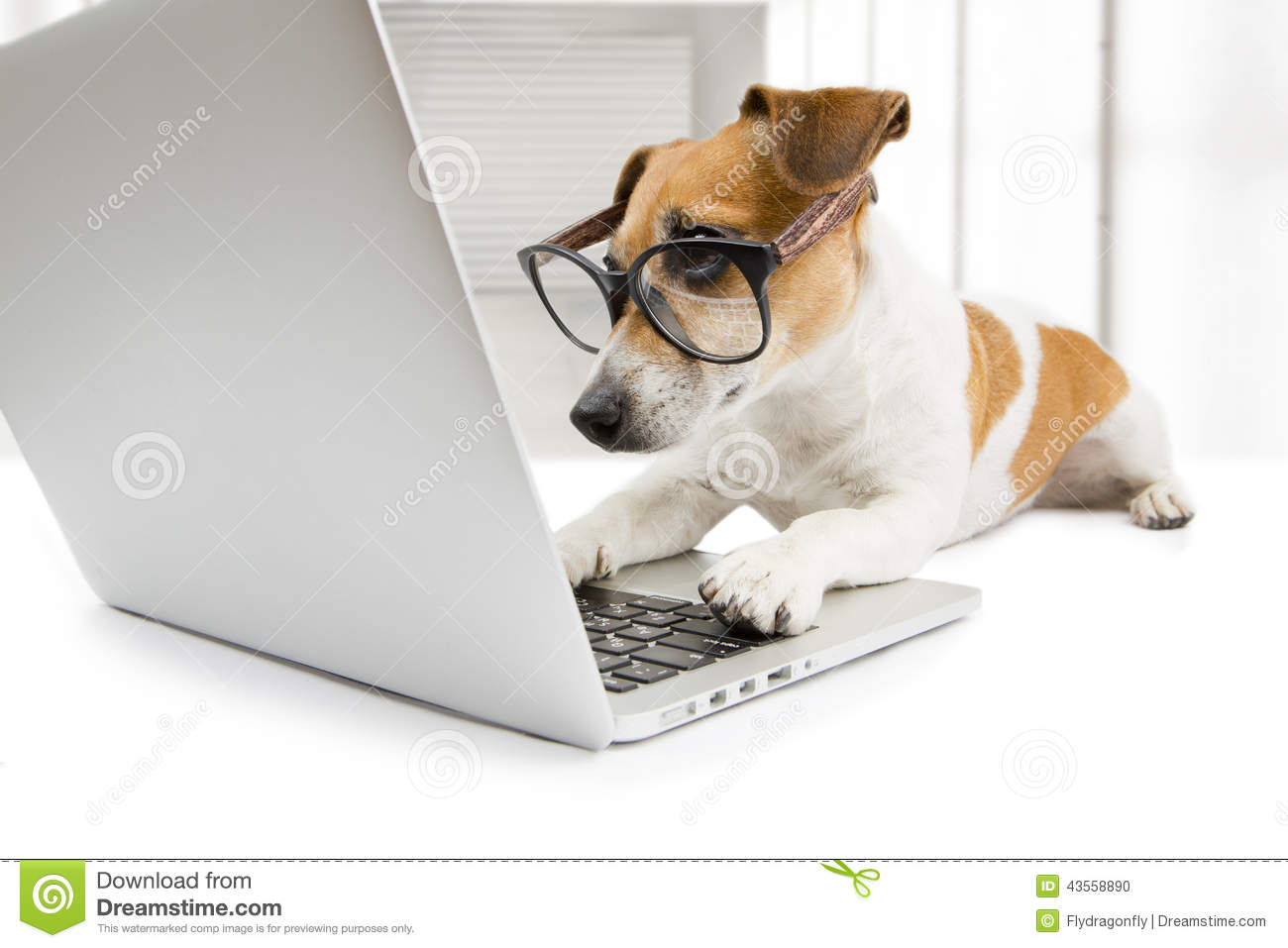 Smart dog working with pc