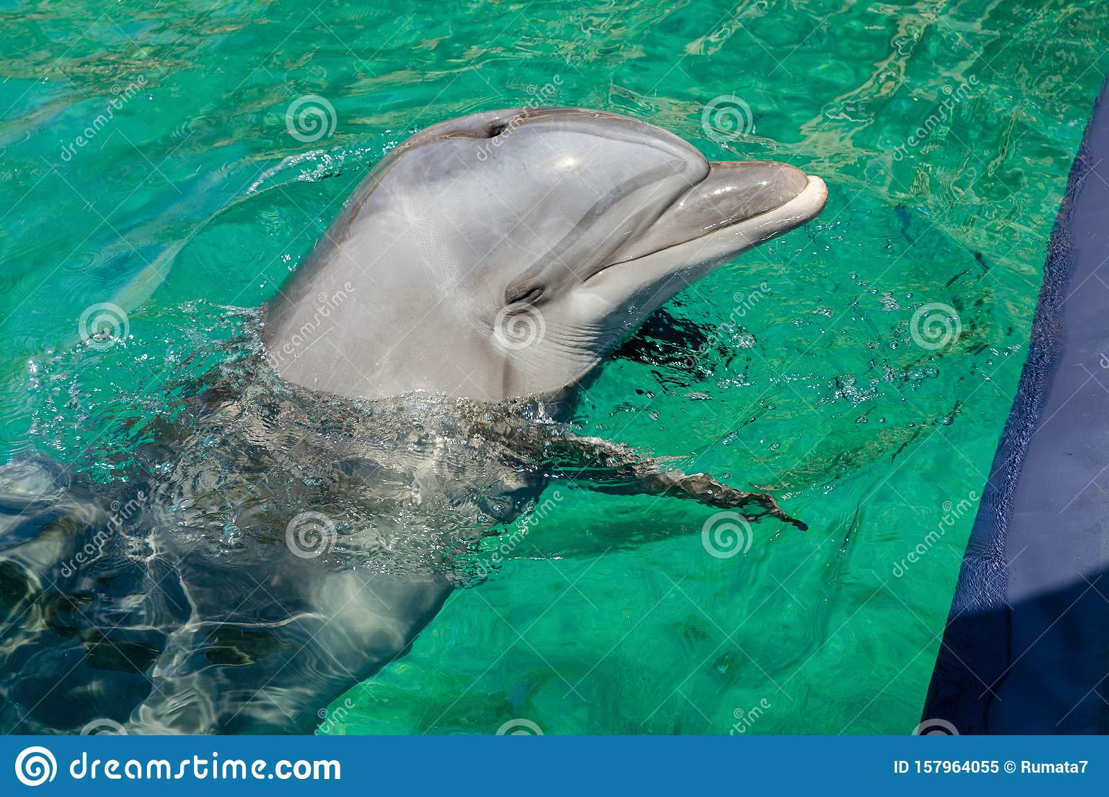 Smart dolphin at the Dolphin Reef in Eilat,