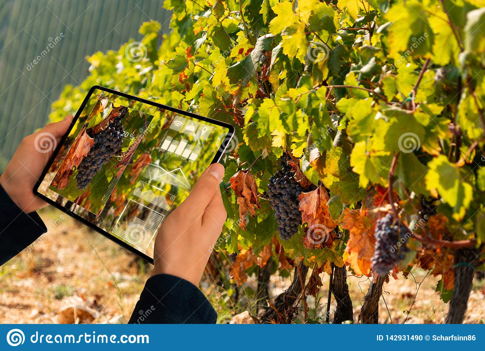 Smart Farming And Digital Agriculture Concept Stock Photo