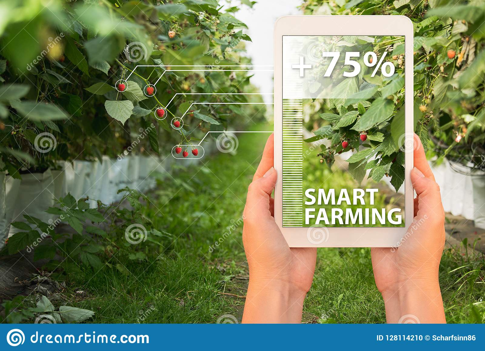 Smart Farming And Digital Agriculture Concept  Stock Photo - Image