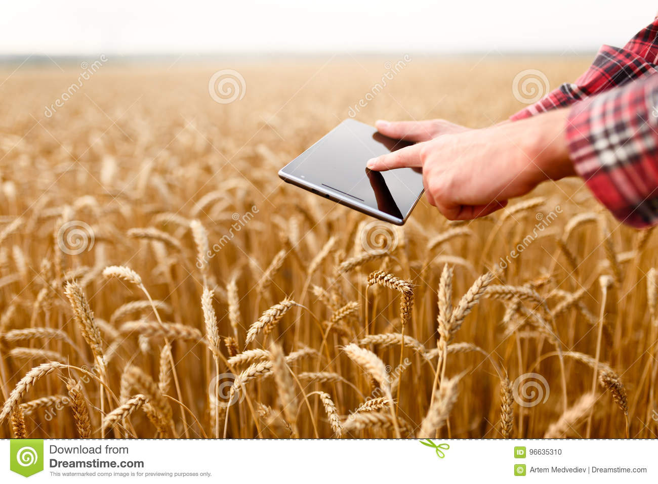 Smart farming using modern technologies in agriculture. Man agronomist farmer touches and swipes the app on digital
