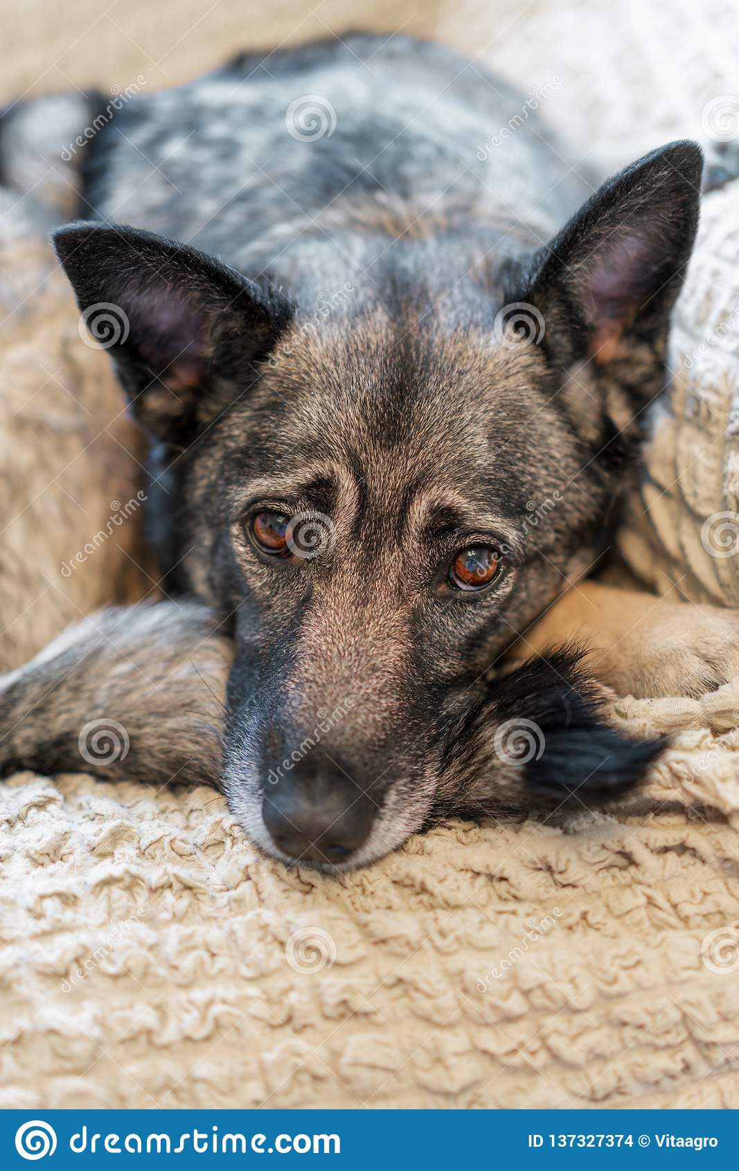 Smart hund som väntar på hans ägare