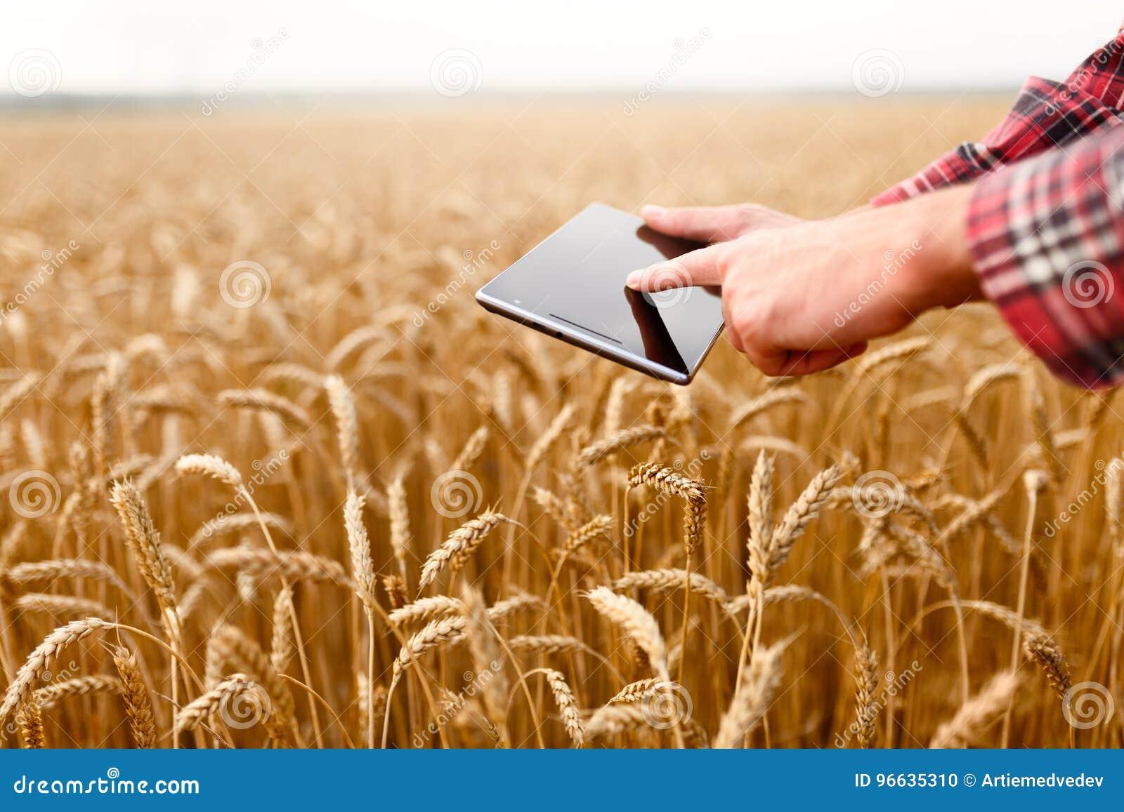 Smart que cultiva usando tecnologías modernas en agricultura El granjero del agrónomo del hombre toca y birla el app en digital