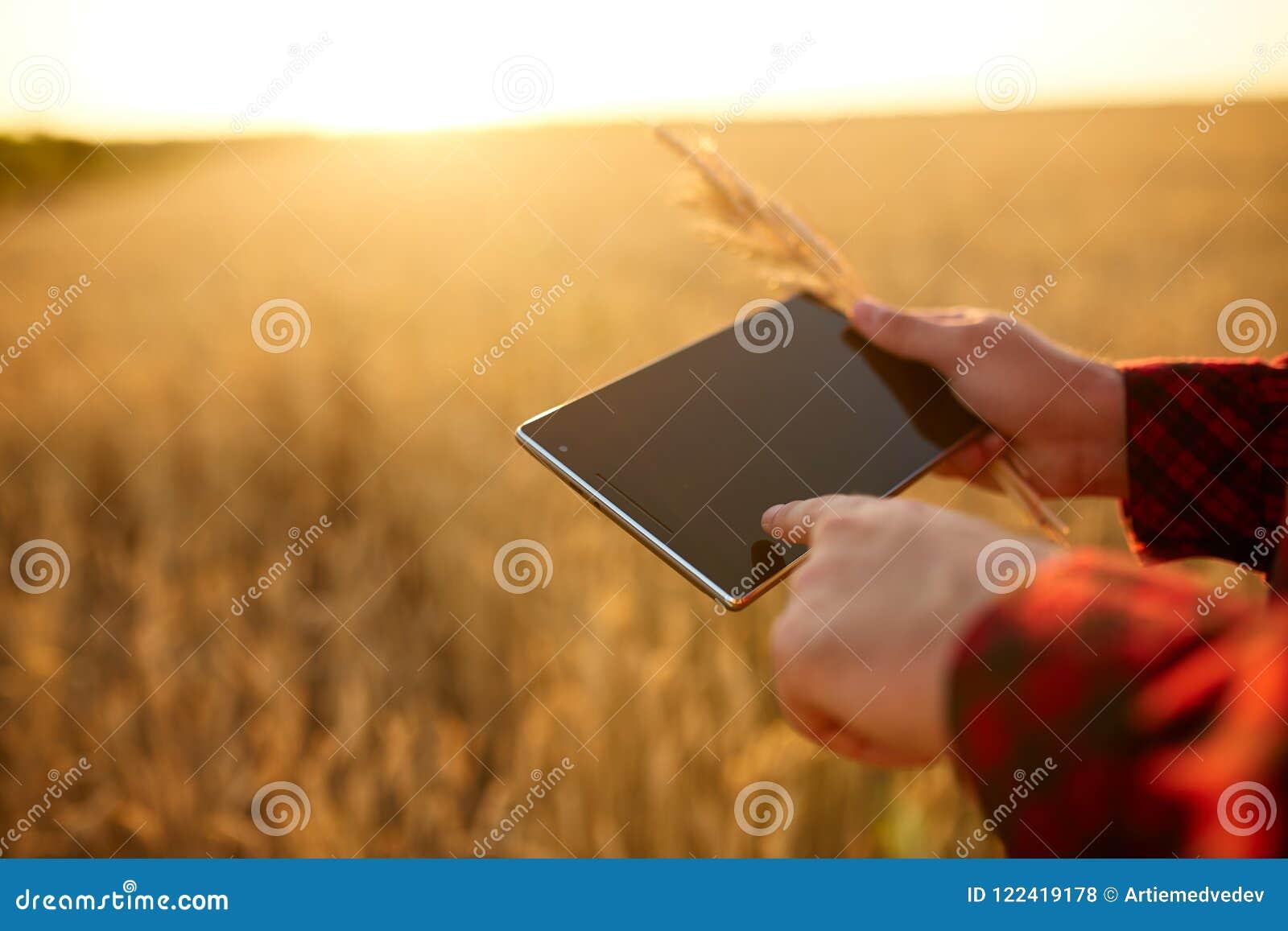 Smart que cultiva usando tecnologias modernas na agricultura Equipe o fazendeiro do agrônomo com o tablet pc digital no trigo