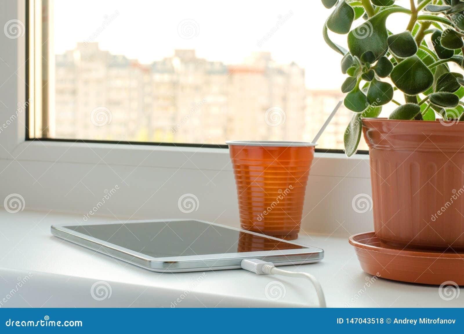 Smartphone i zieleń kwitniemy w wazie na okno