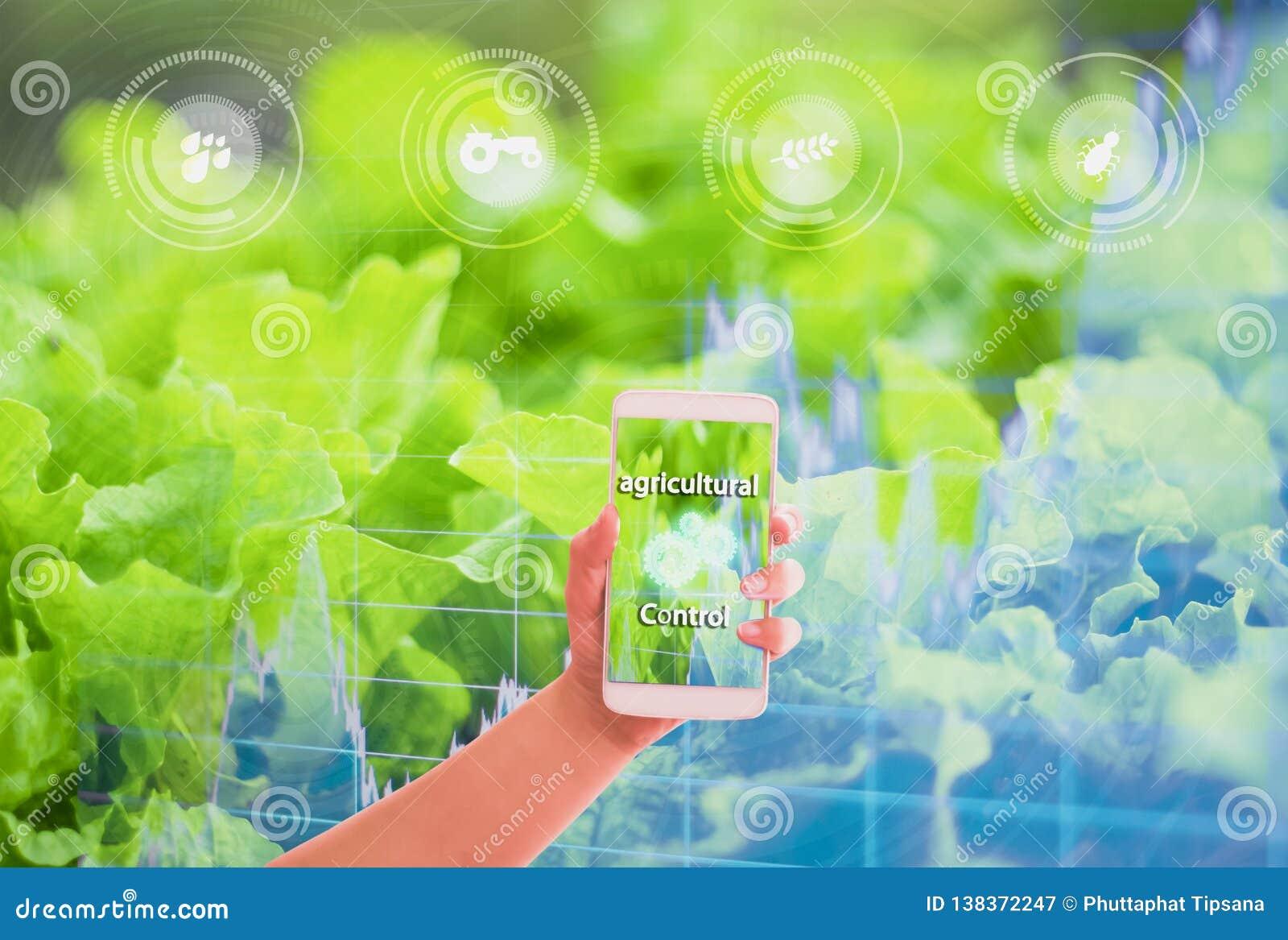 Smartphone van de handholding, gouden gebieden die als achtergrond, grafieken voorraden, de controle van het Concepten landbouwpr