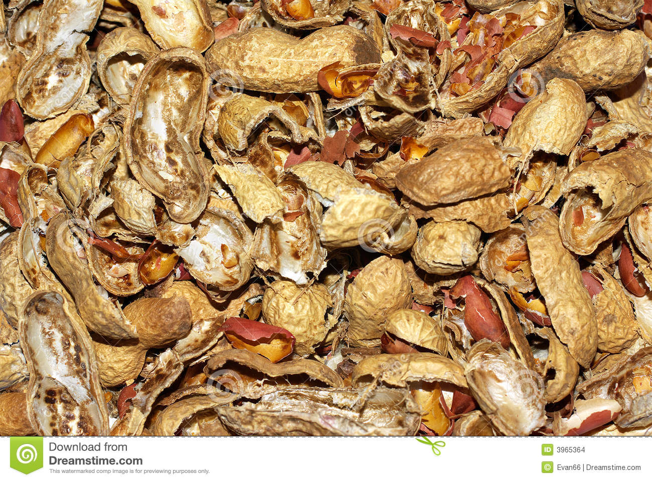 Free Peanut IN Shell Clipart and Vector Graphics  Clipartme