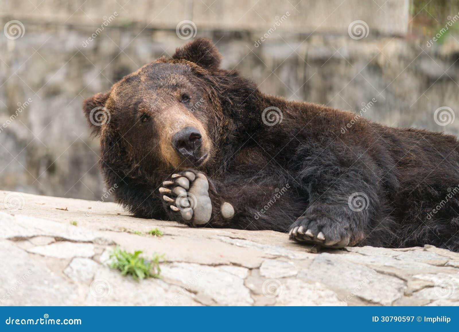 Smile Bear Royalty Fre...