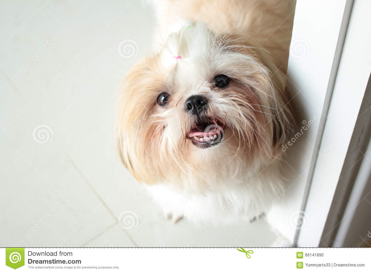 Image result for Cute Smile Dog