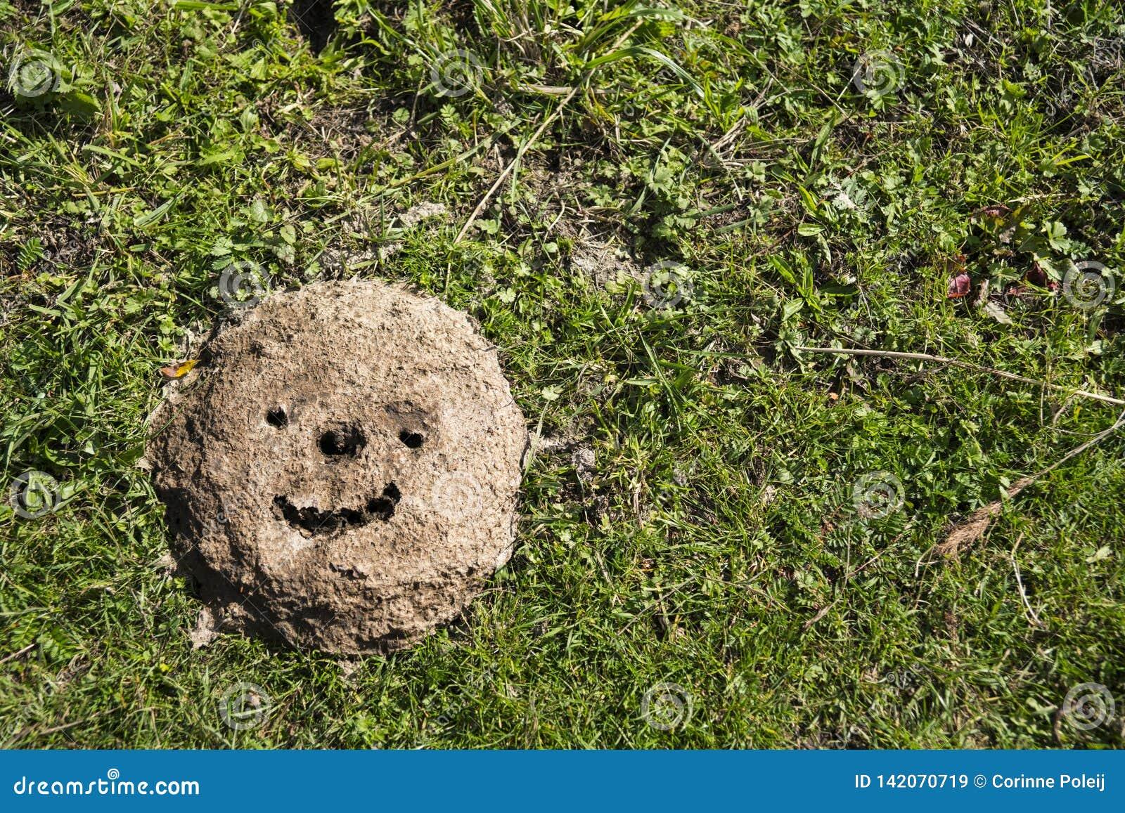 Smiley die in koemest op gebied wordt getrokken