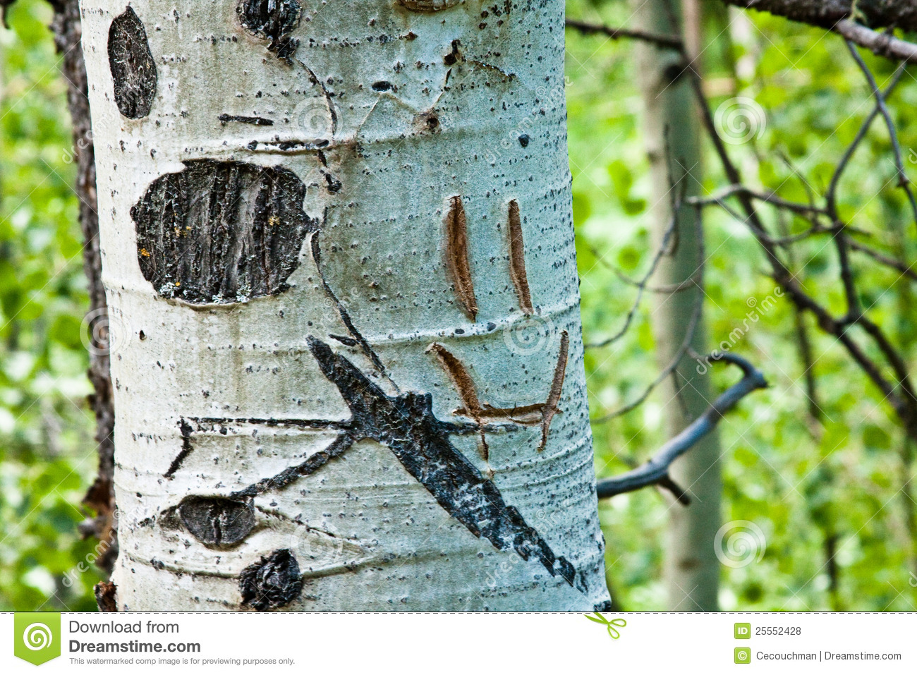 Smiley face carved into aspen tree trunk stock photo
