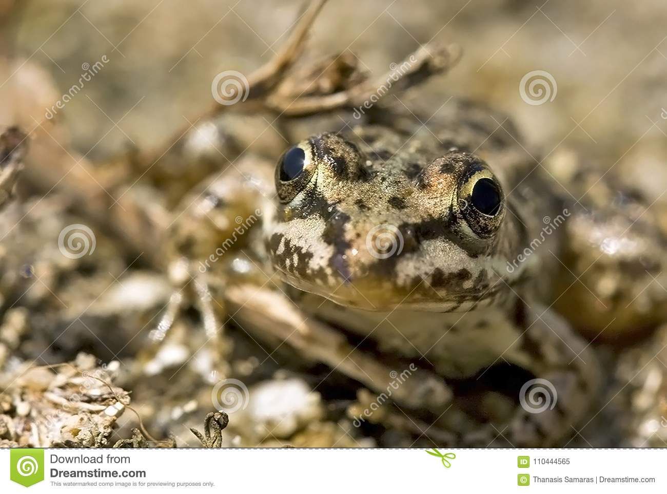 Smiley Frog Stock Photos - Royalty Free Pictures