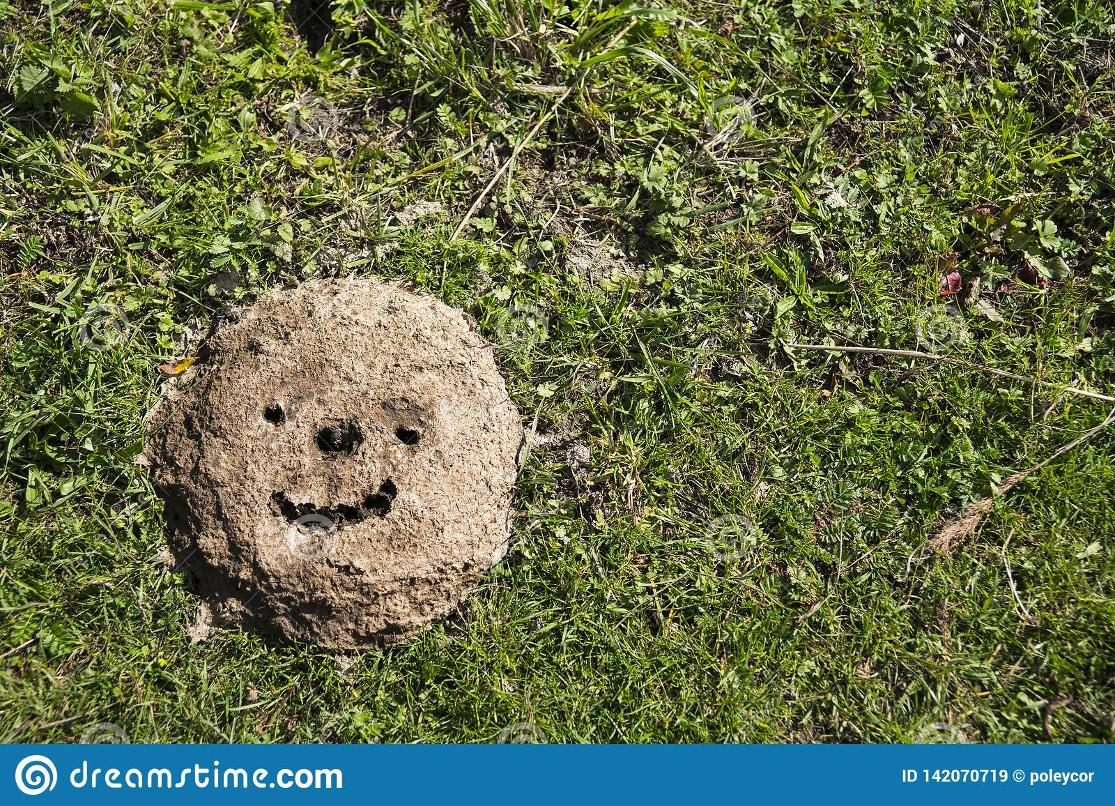 Smiley gezeichnet in Kuhfladen auf Feld