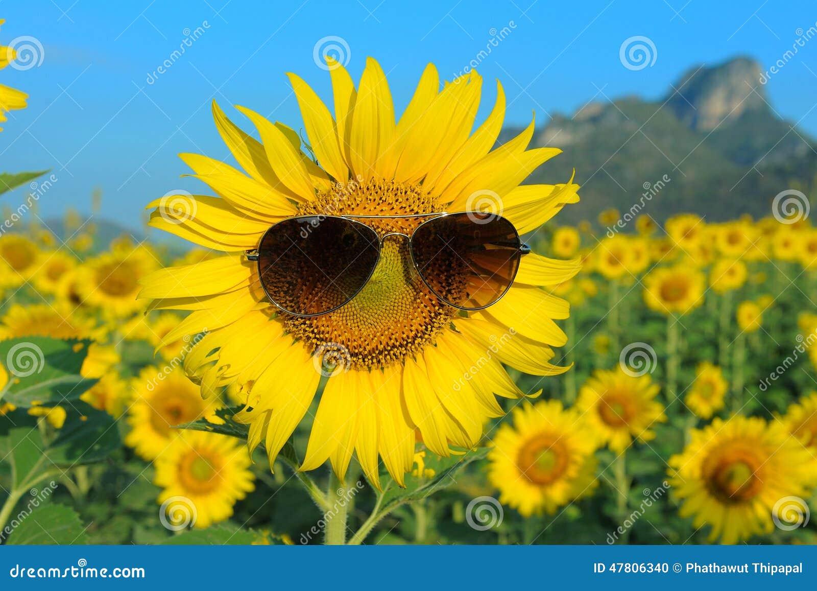 Smiley Sunflower Wearing Sunglasses Stock Photo - Image ...