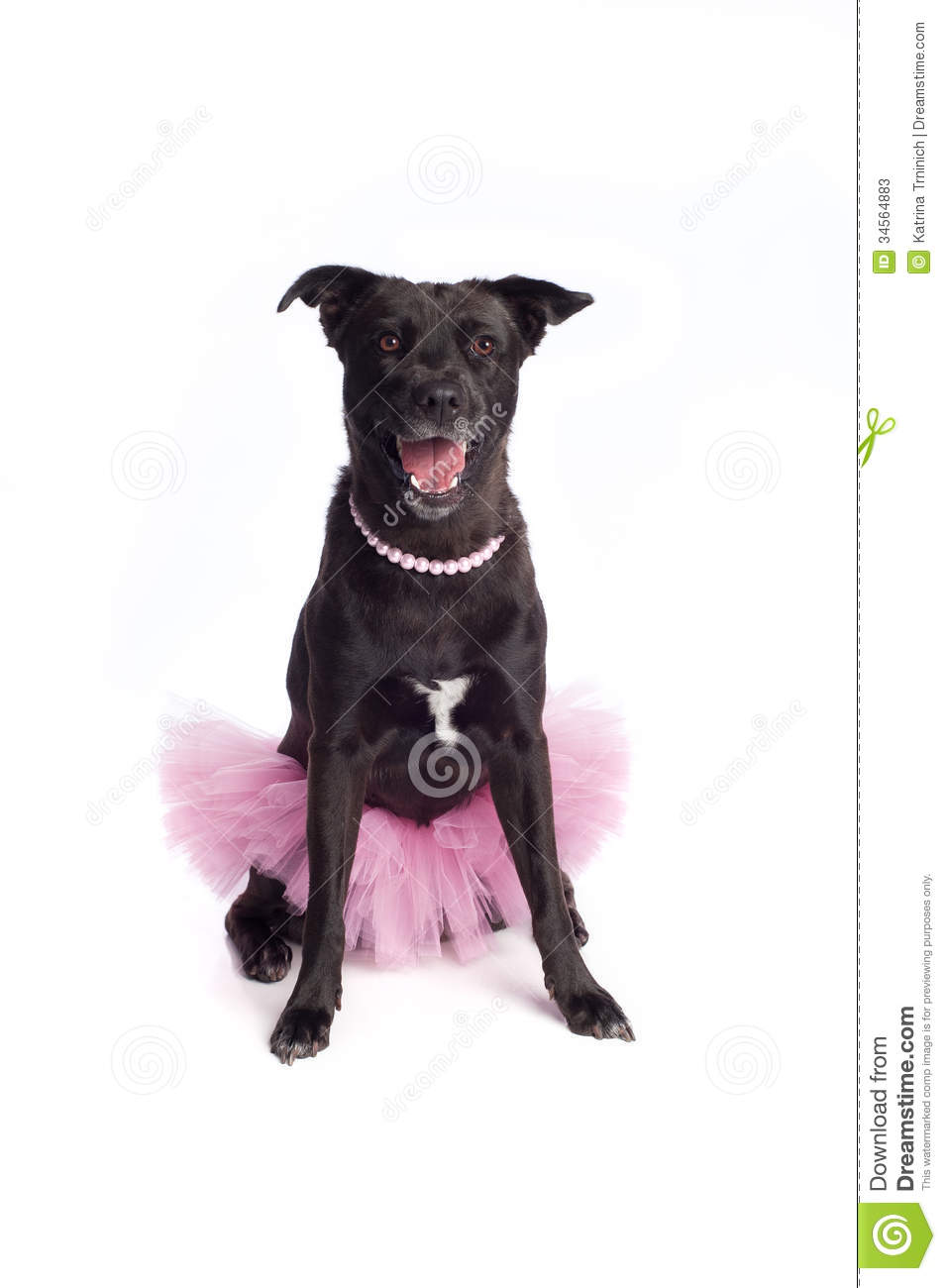 Smiling Black Mixed-Breed Dog In Pink Tutu And Pea Stock ...