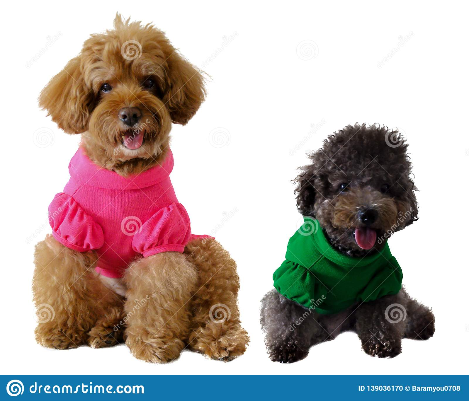 A smiling brown and black poodle dog wearing t-shirt and sitting together.