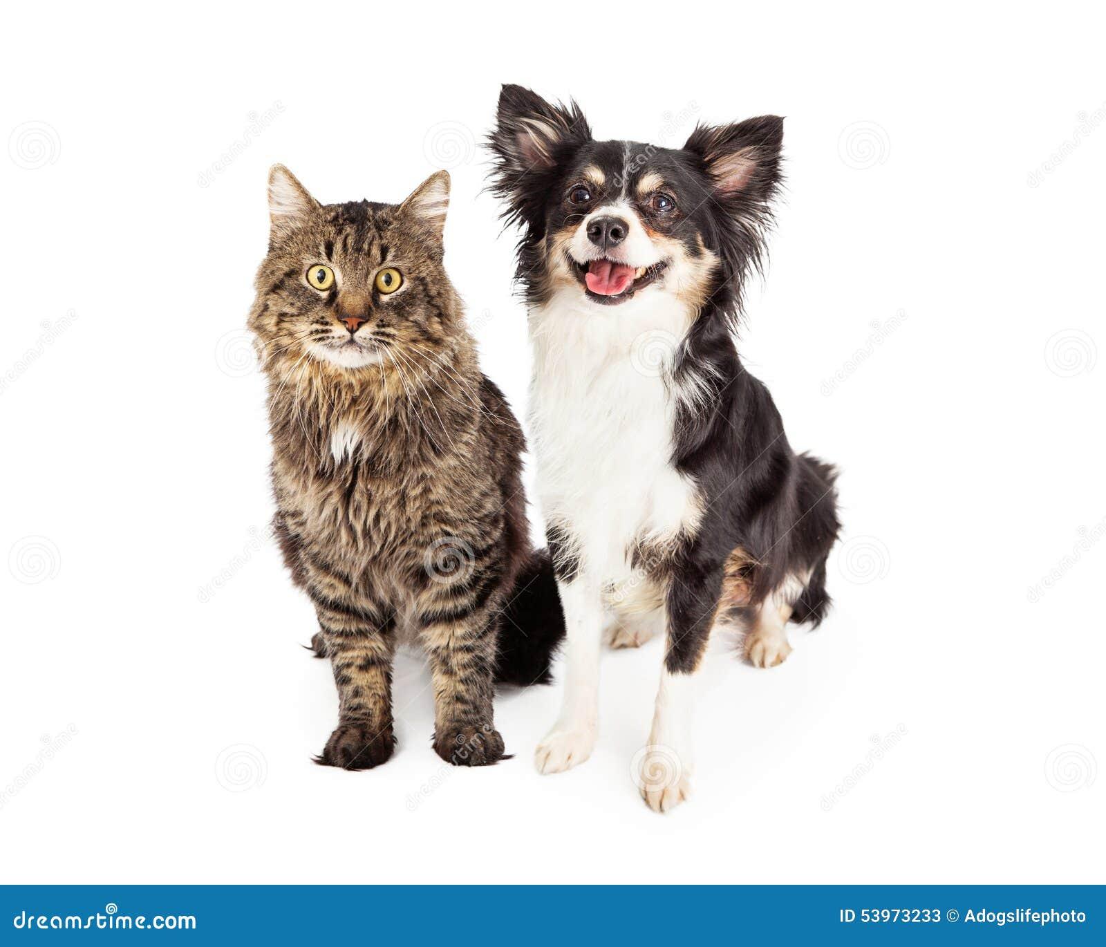 Cat Dog Breed Together