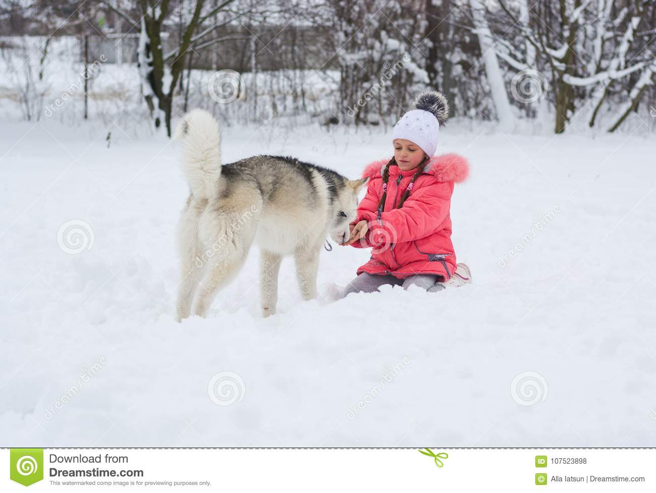 523869a6cba A smiling girl is feeding a Husky dog in the countryside. Little girl  playing with a Siberian husky breed dog in the winter in the snow