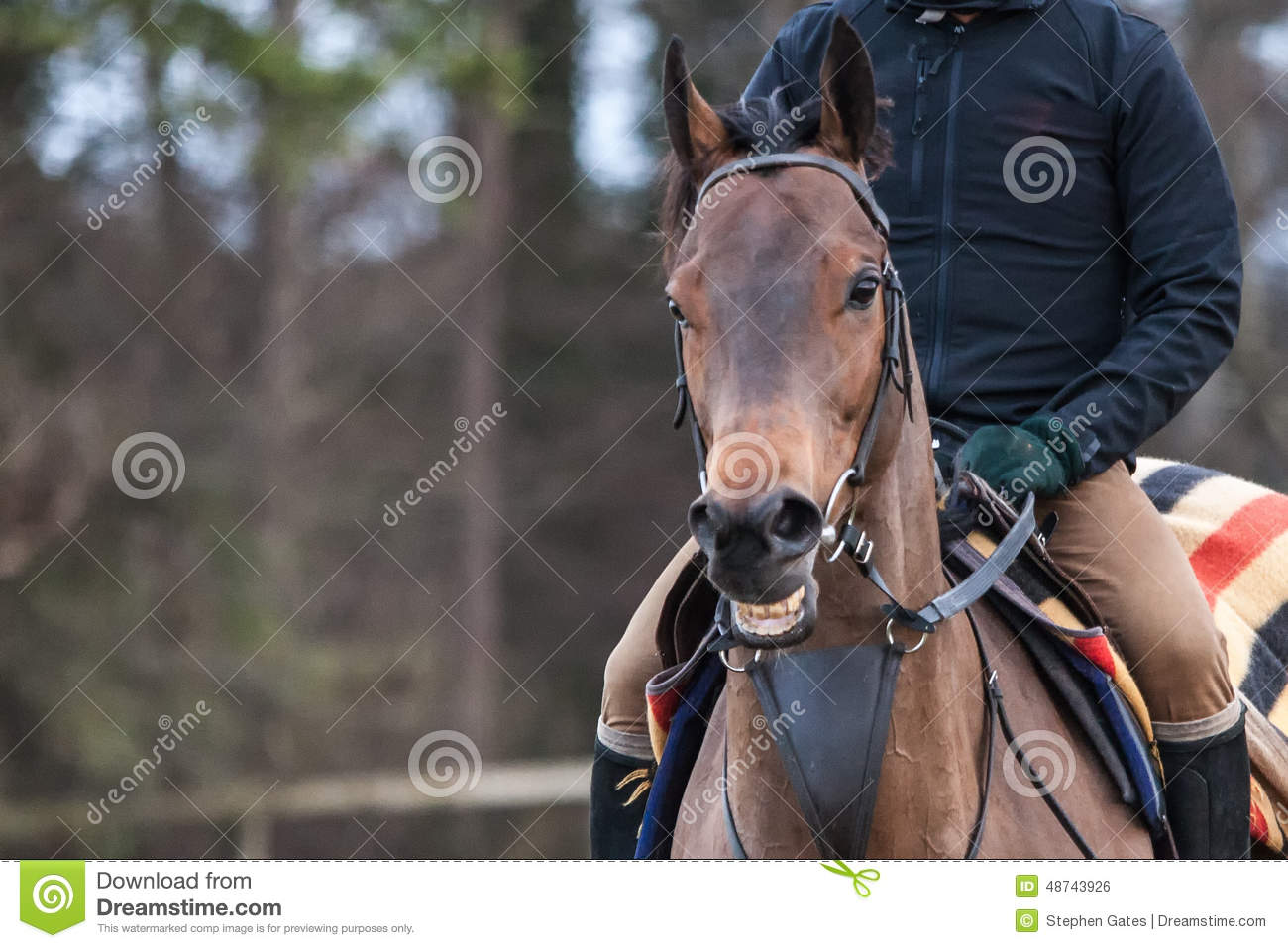 Smiling Horse Stock Photo Image Of Head Looking Smile 48743926