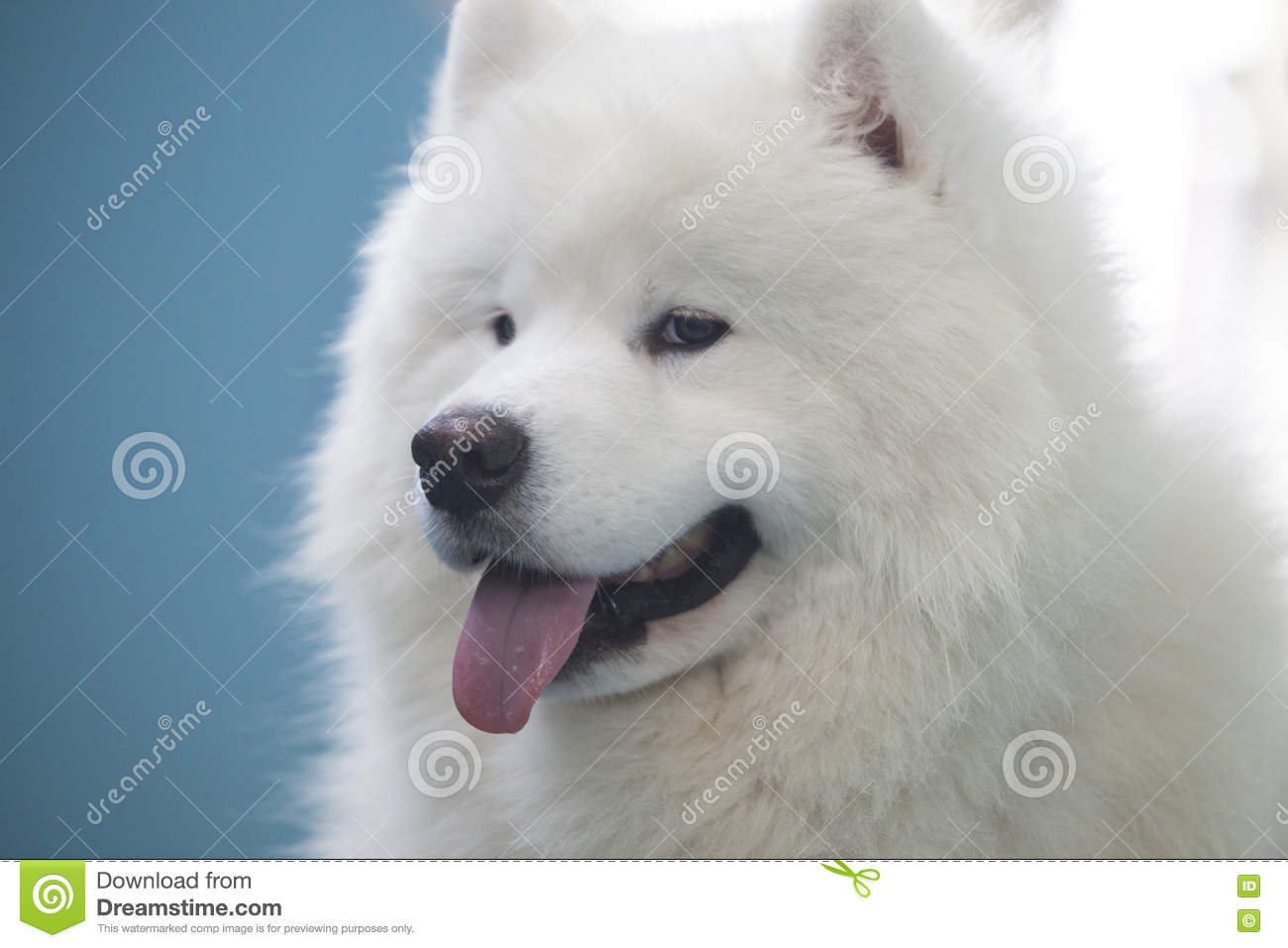 Television Dog Actor, Sammy, appears on Animal Planet's Pup ...