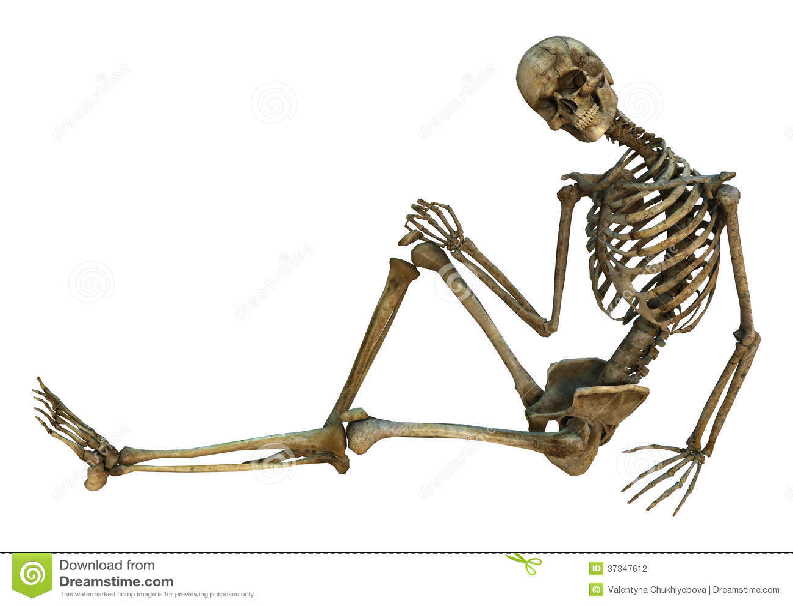 Smiling Skeleton Stock Photography Image 37347612