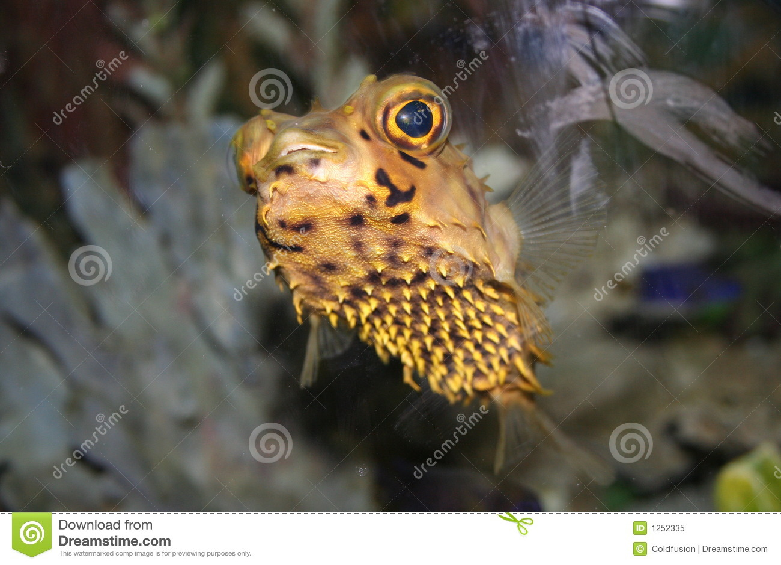 smiling Tropical Fish - Hedgehog , Diodon