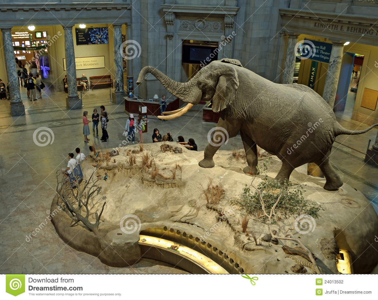 Smithsonian Museum African Elephant Exhibit Editorial