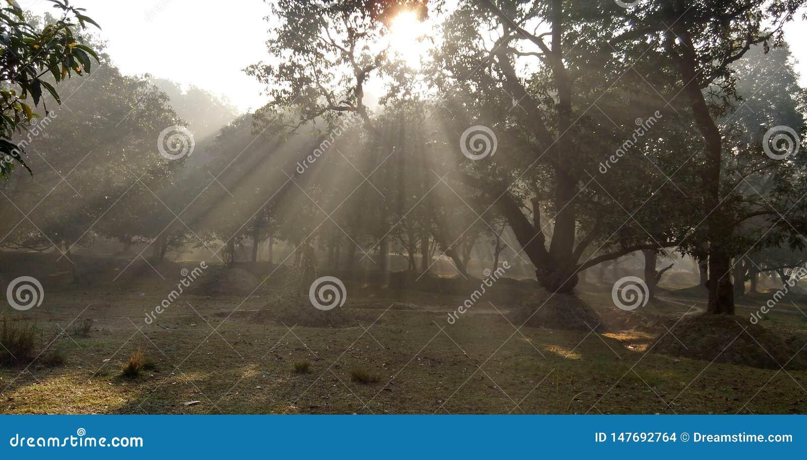 Smog und Sonnenlicht morgens