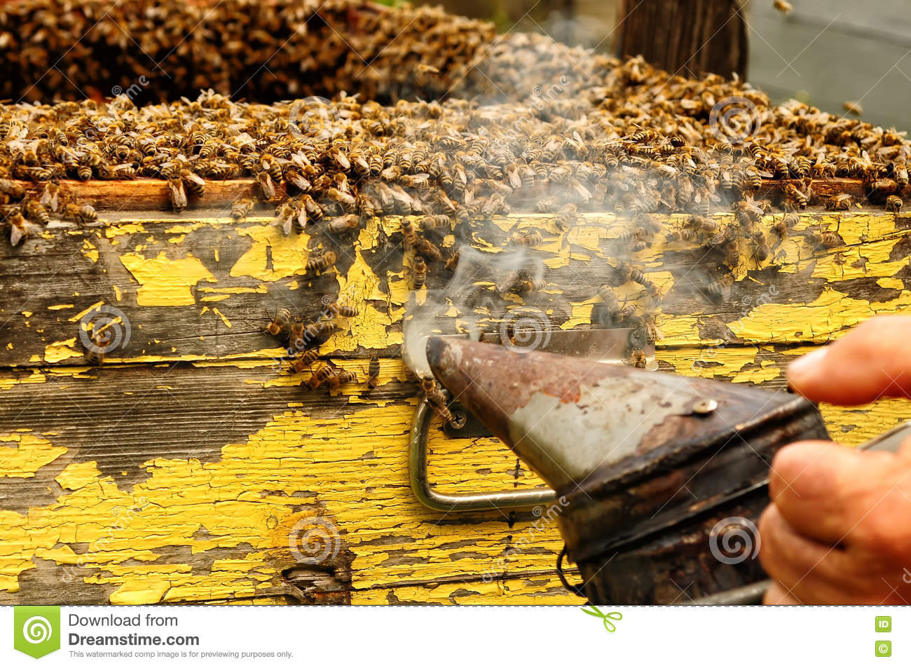 Smoker Beekeepers Tool To Keep Bees Away From Hive Stock