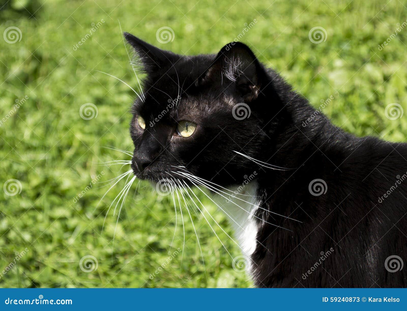 Smoking blanco y negro Cat Outdoor