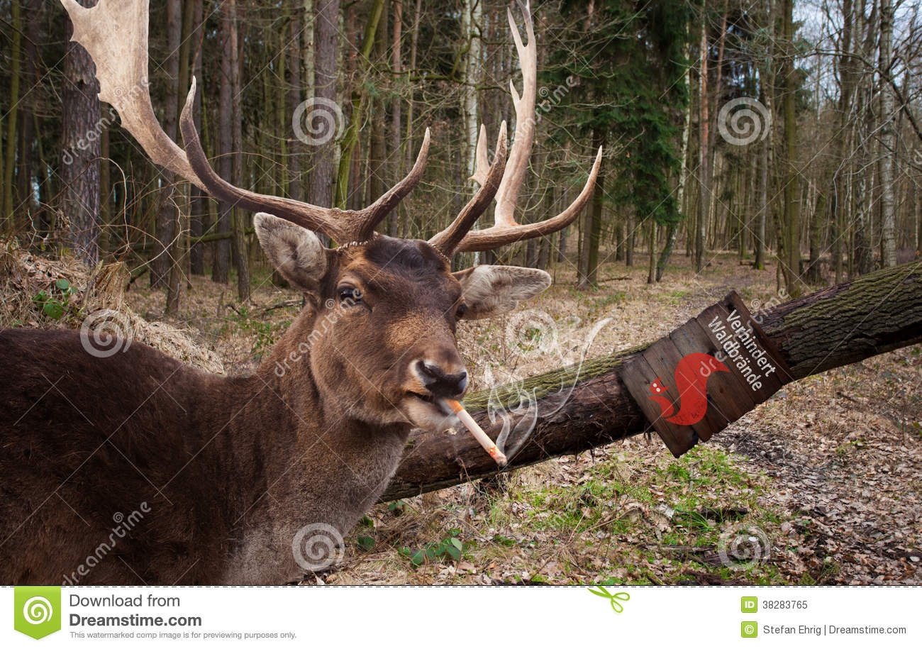 smoking-deer-38283765.jpg