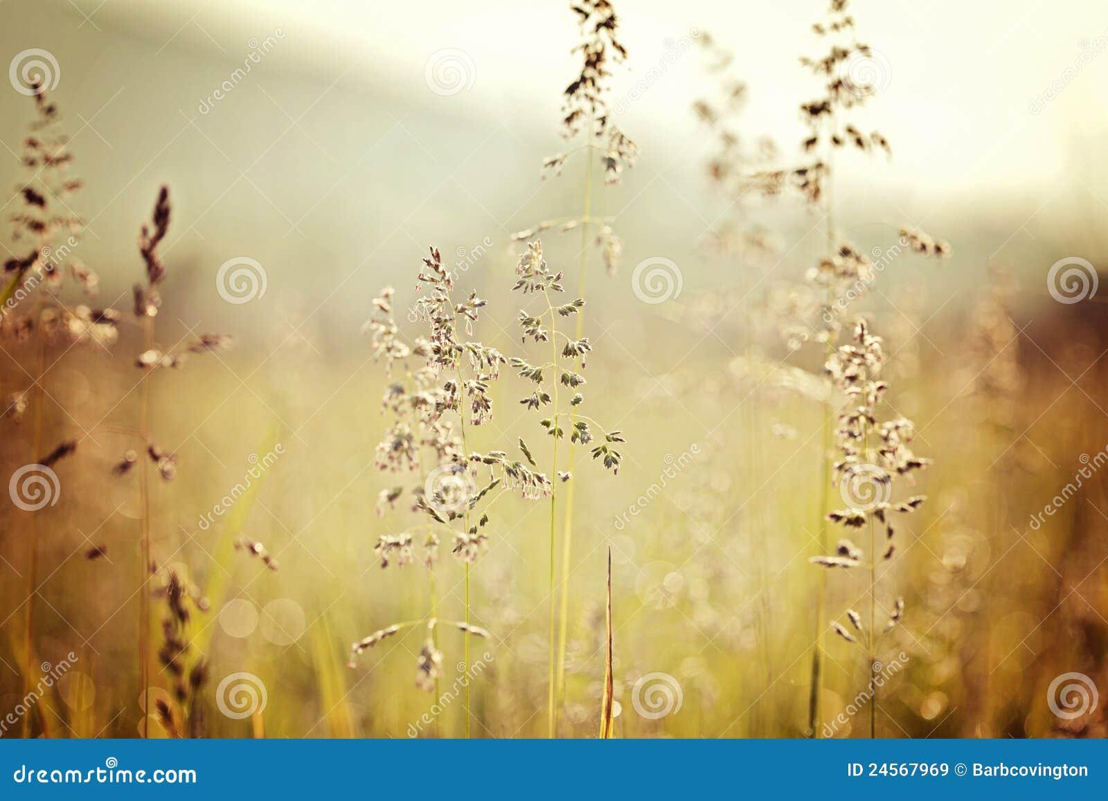 Smoky Mountains Cades Cove grass fields
