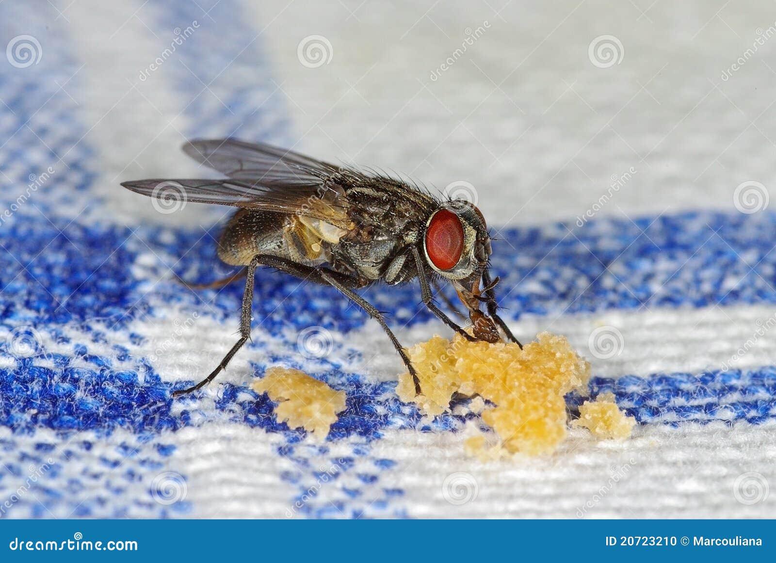 Smulpajer flyger att suga för hus