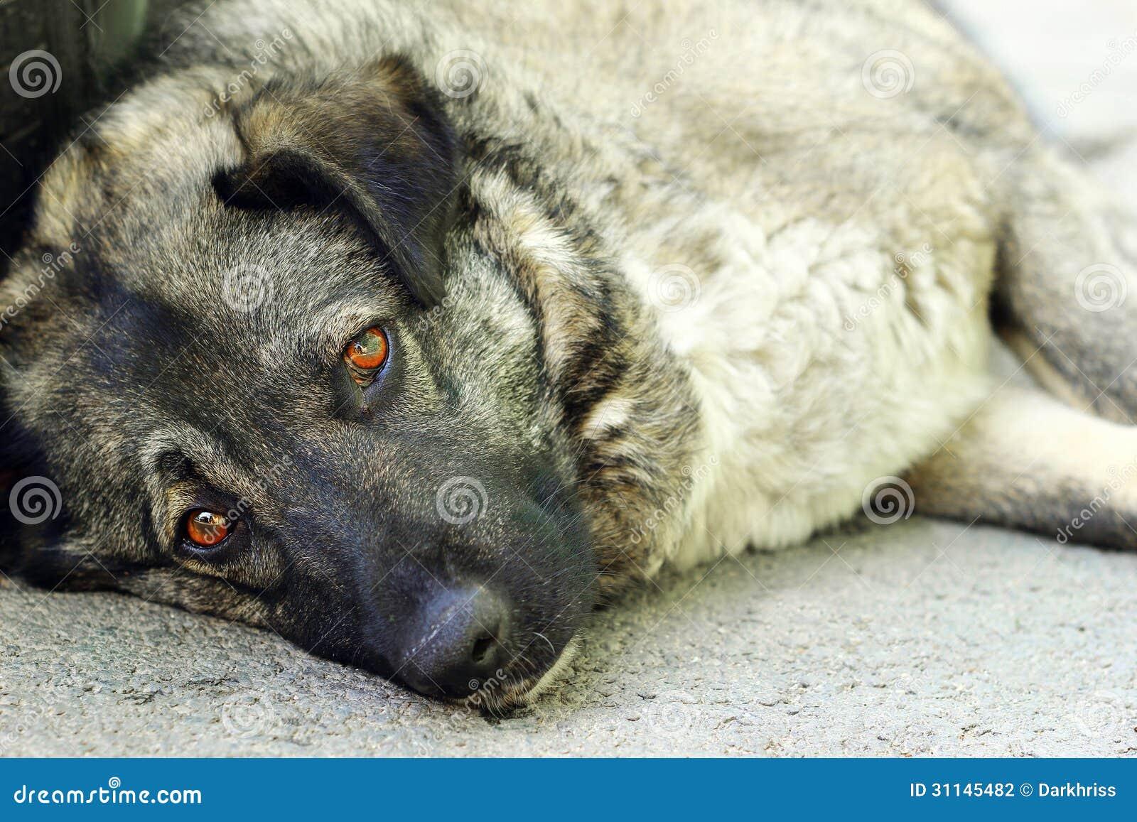 Smutny przybłąkany pies