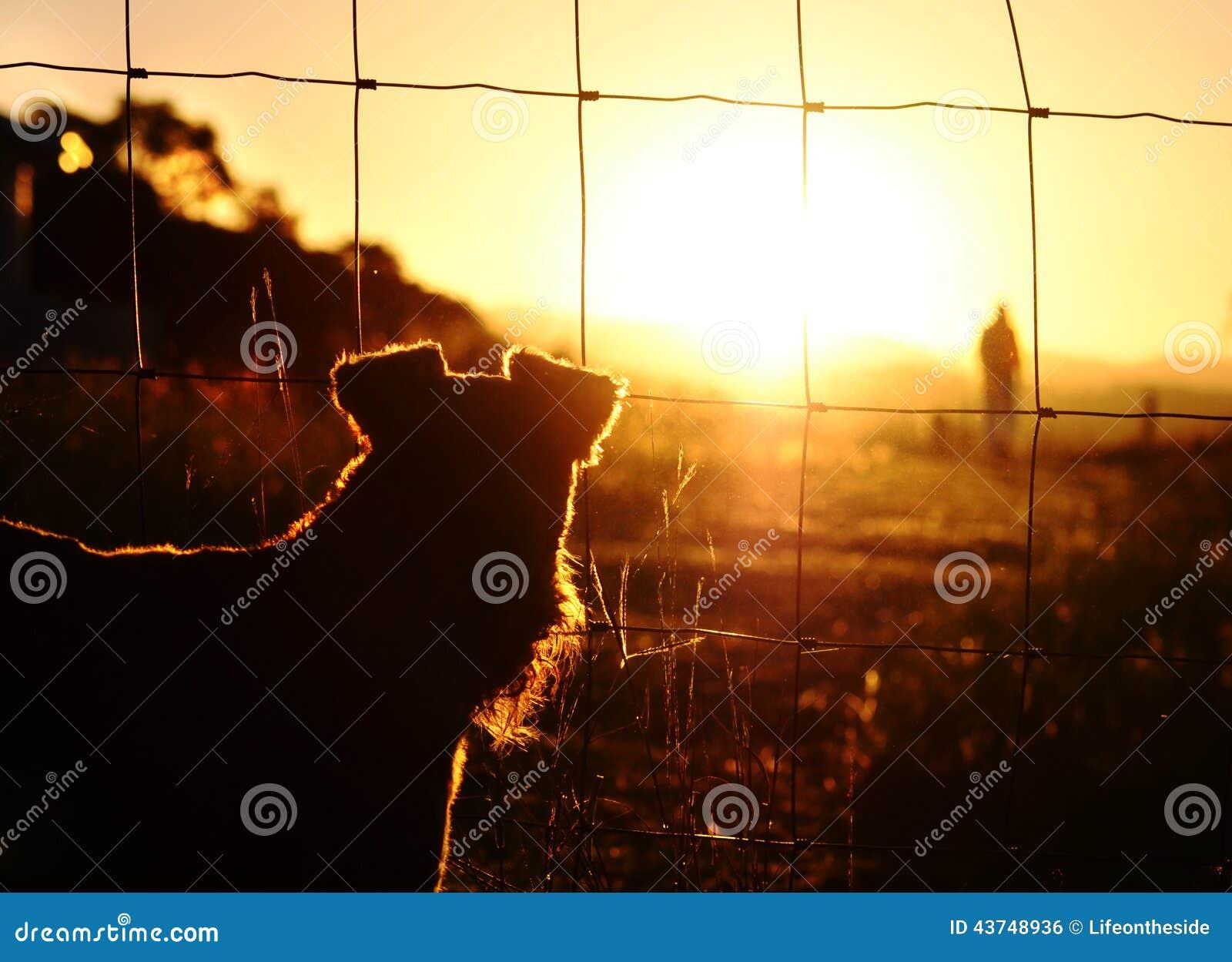 Smutny ratuneku pies ogląda właściciela opuszczać on bezdomny
