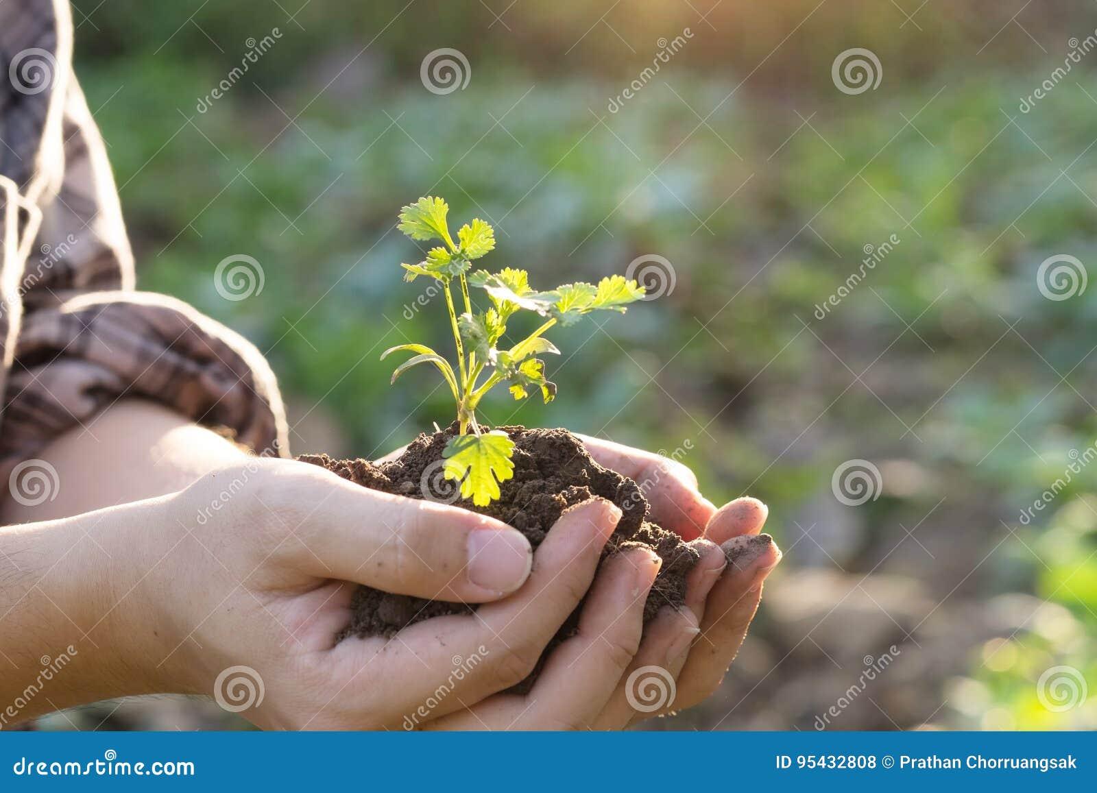 Smutsa kultiverad smuts, jord, jordning, åkerbrukt fostra för landbakgrund behandla som ett barn växten förestående