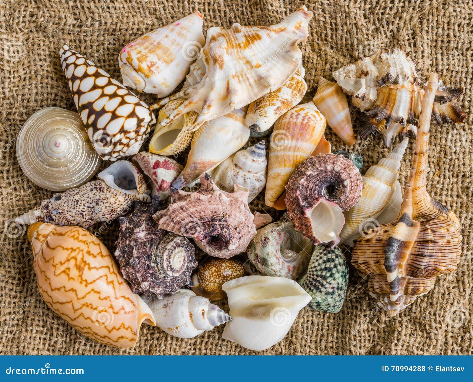 Snäckskal på sanden av en strand