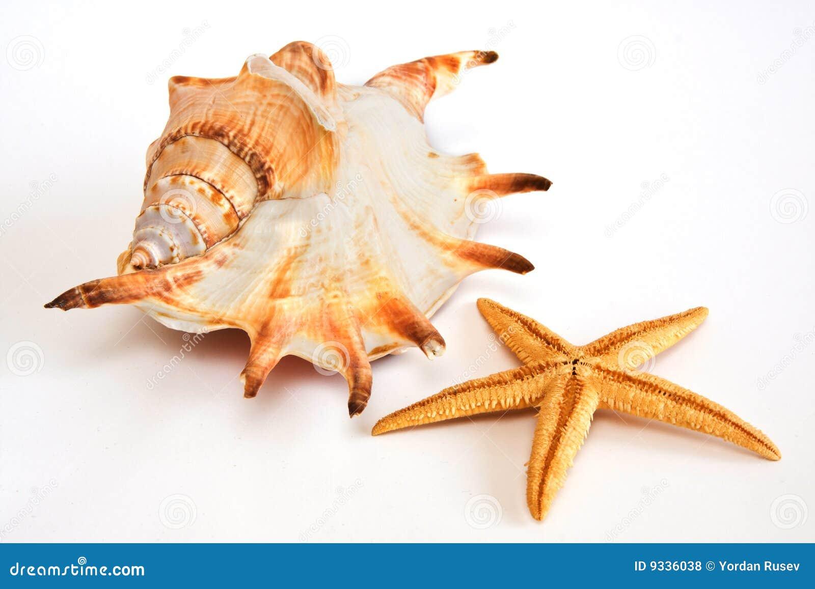 Snäckskalsjöstjärna