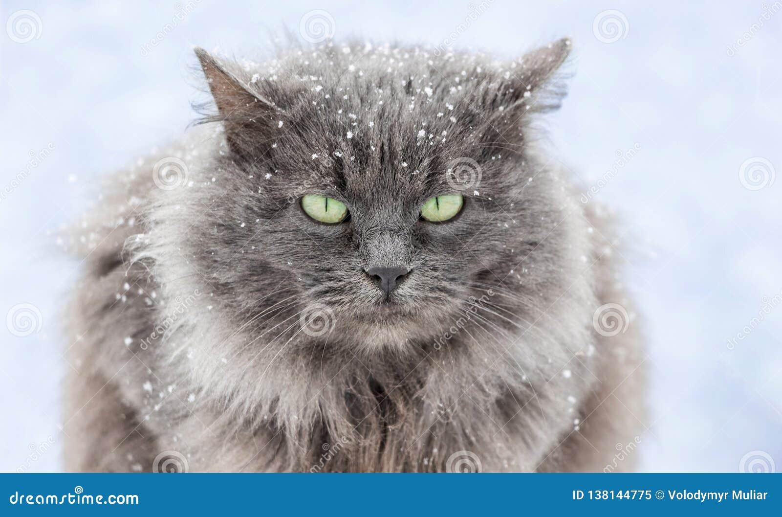 Snö-täckt katt med gröna ögon som sitter på street_en