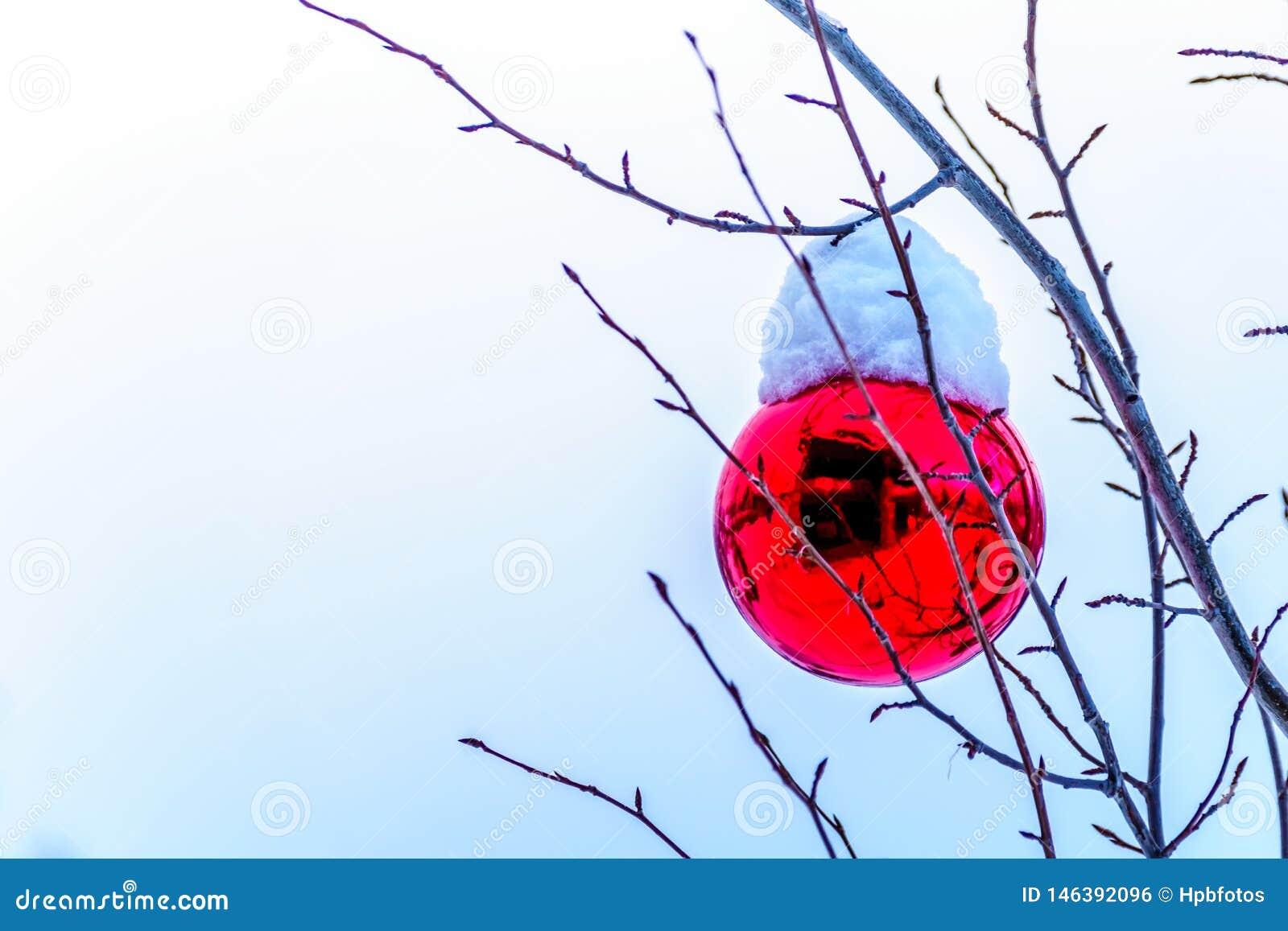 Snö täckte röd julgarnering som hänger på trädfilialer av ett träd