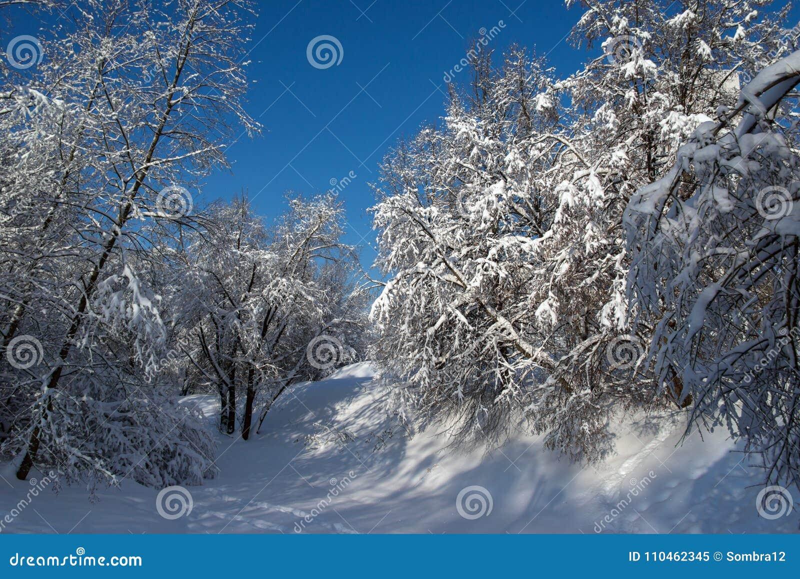 Snö-täckte träd nära en djupfryst flod