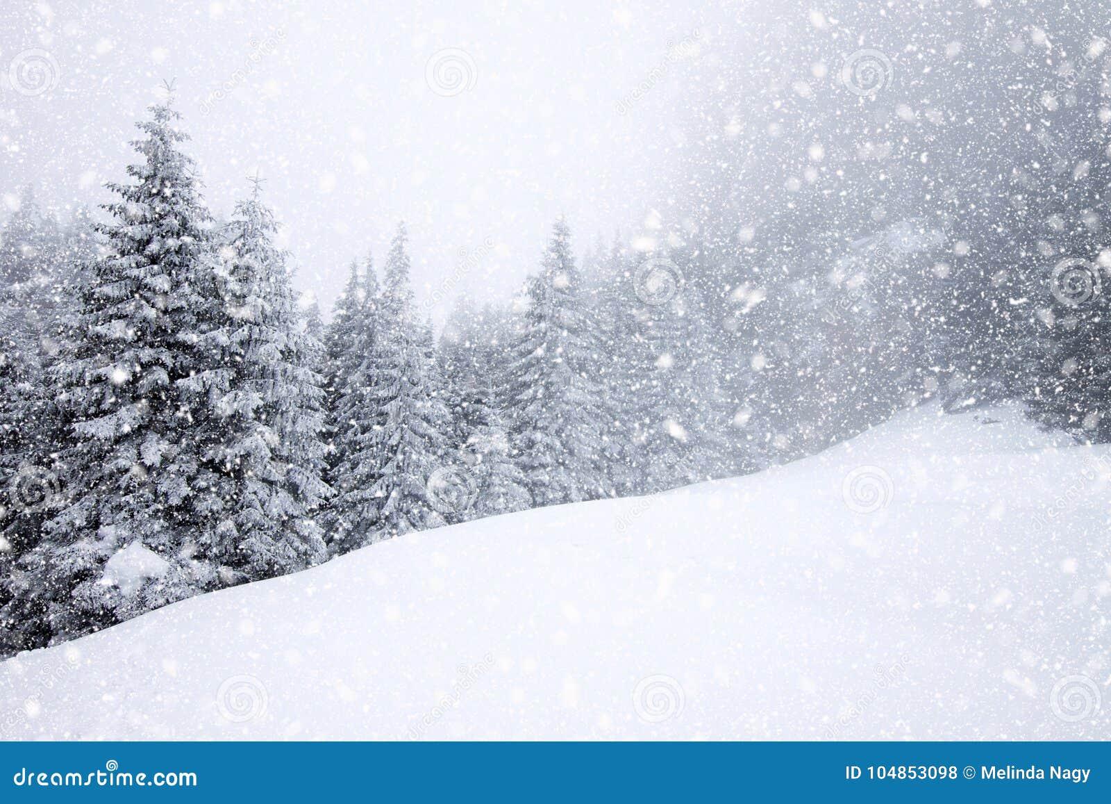 Snöa dolda granträd i tungt snöfall - julbakgrund