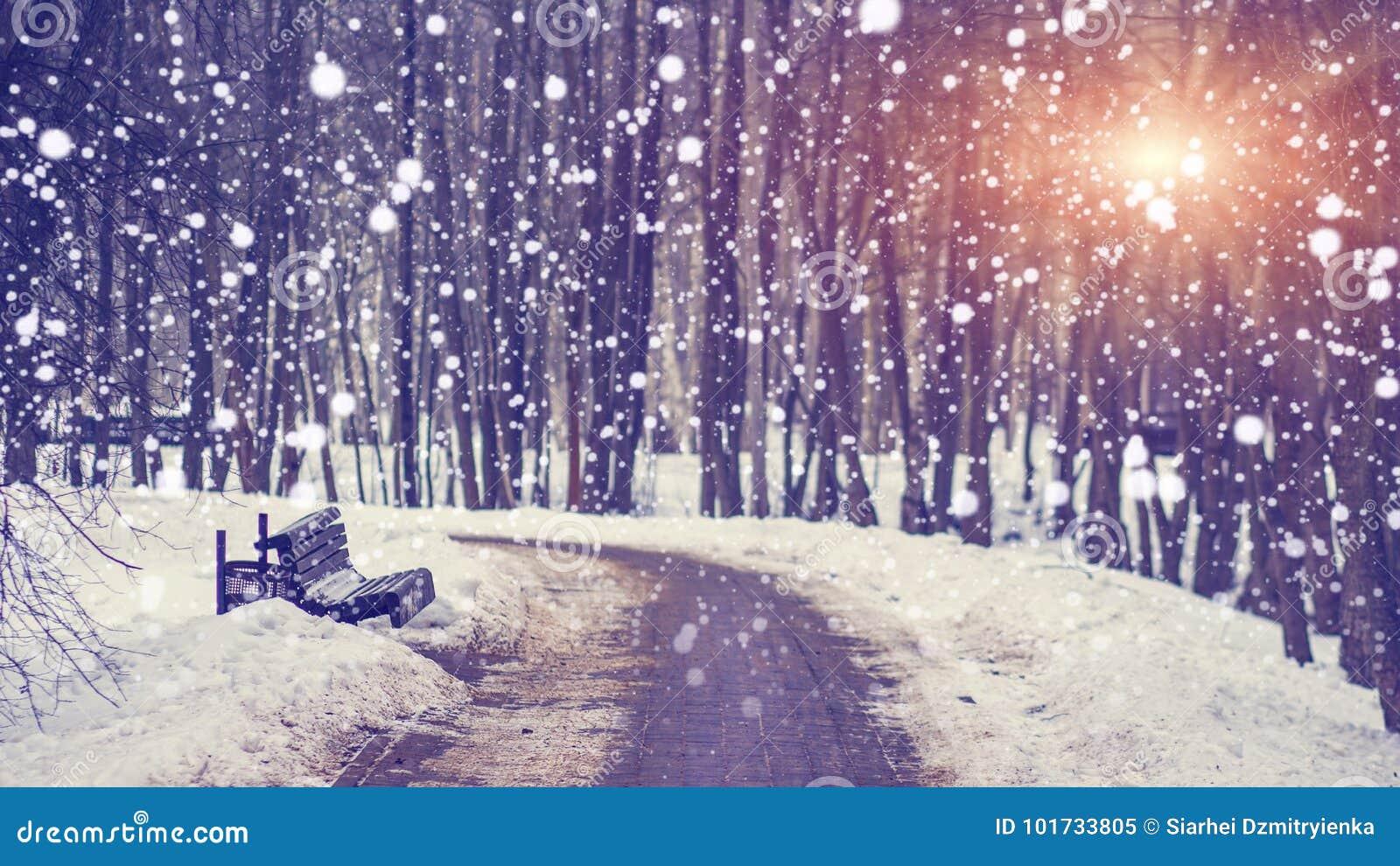 Snöfall i tyst vinter parkerar på den ljusa solnedgången Snöflingor som faller på den snöig gränden Tema för jul och för nytt år