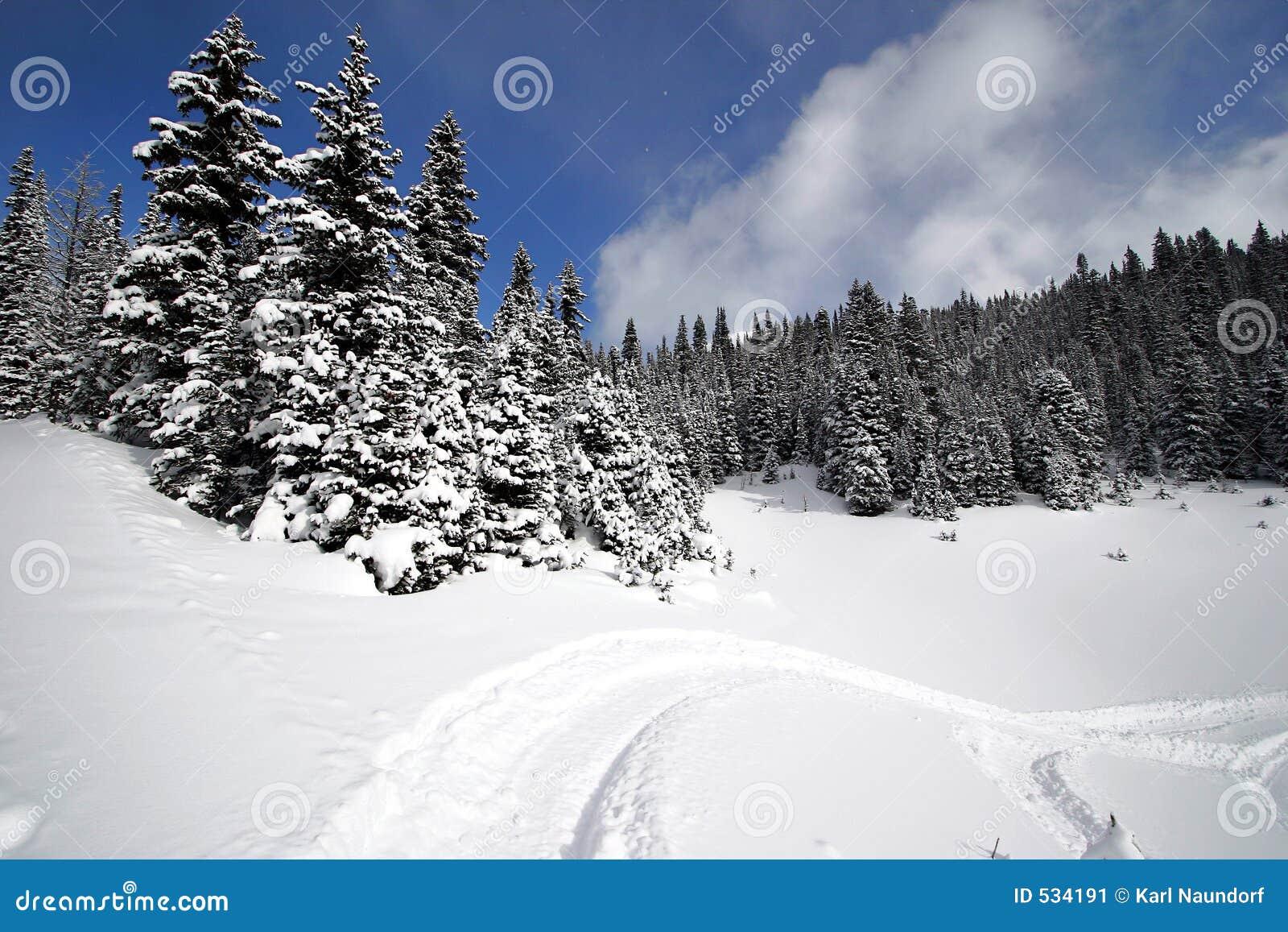 Snöig alpin skog
