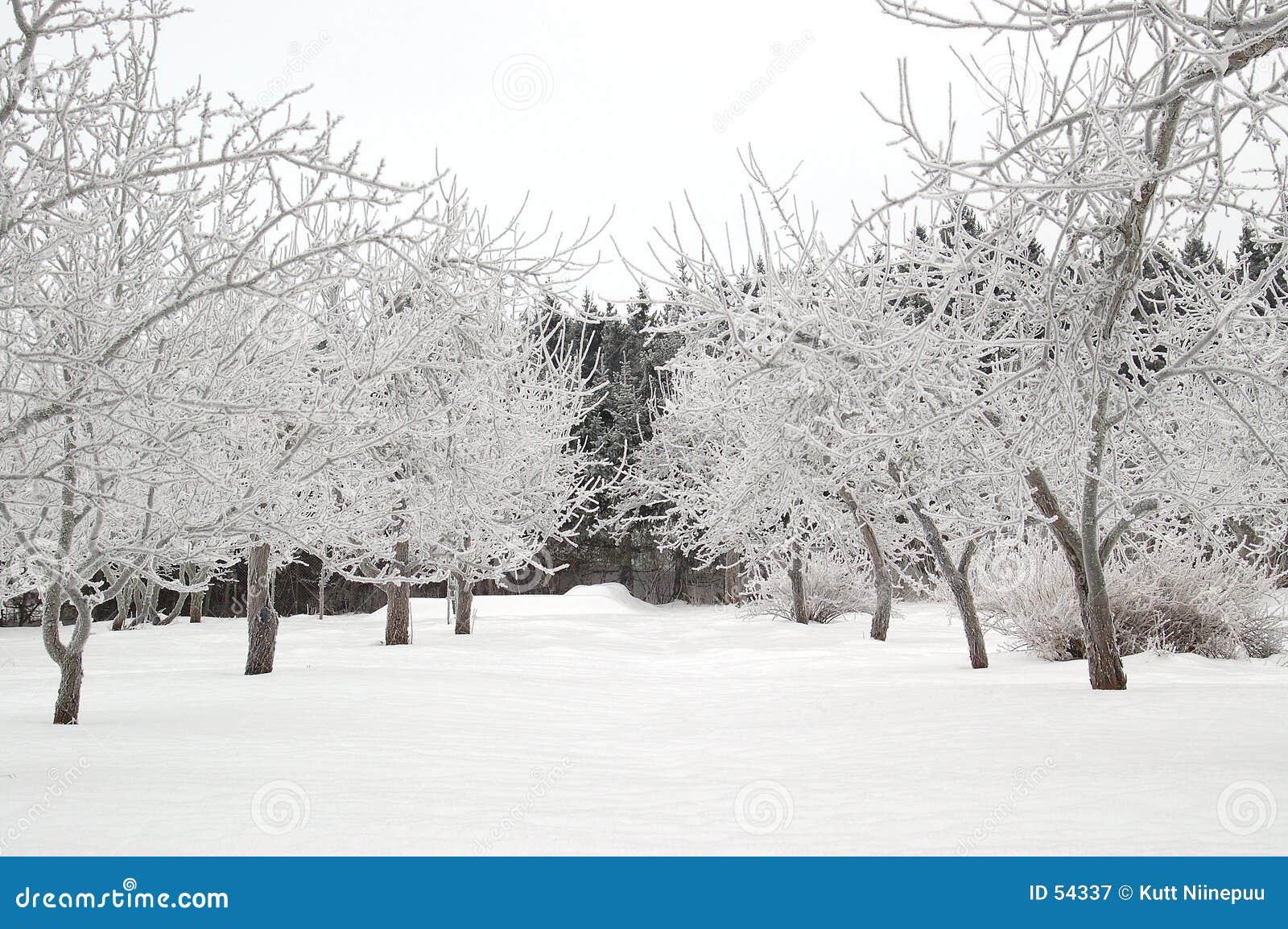 Snöig gränd